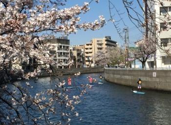 Sakura_1027